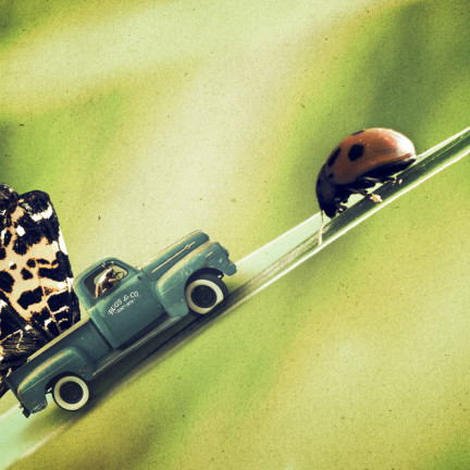 The obstinacy if the ladybug caused chaotic traffic situations